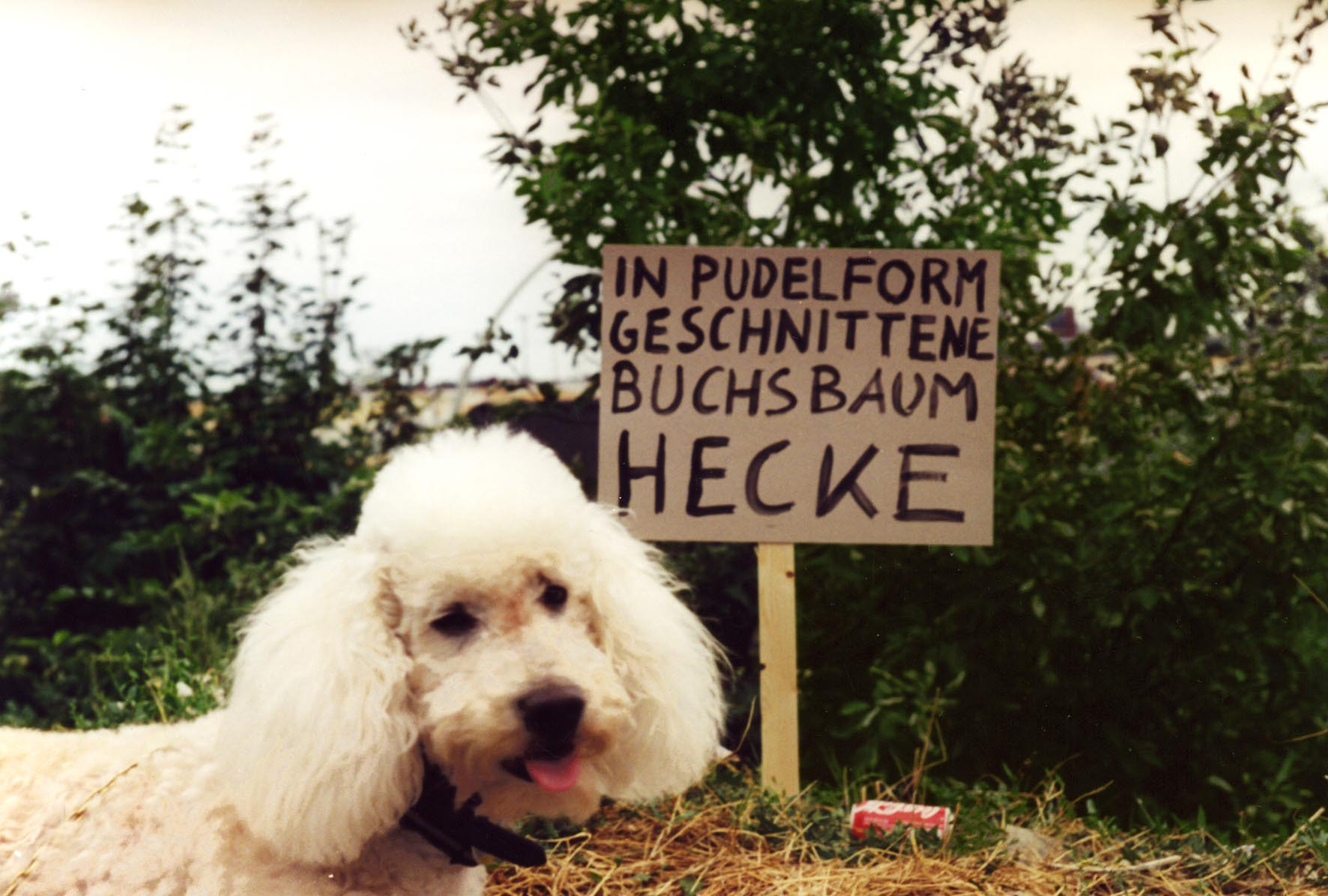 Production of desires begins: Poodle and suggestion for the park1994
